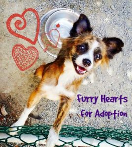 Furry Hearts for Adoption at Sugar Mill Vet Center